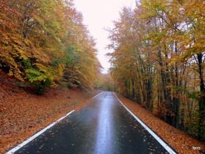 Navarra en otoño. Esta imagen tiene Licencia CC en el Flickr de Fernando Goñi Erice