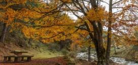 otoño Bungalowsclub