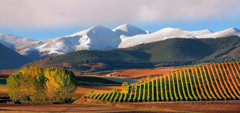Vignobles de la Rioja Image La Rioja Turismo