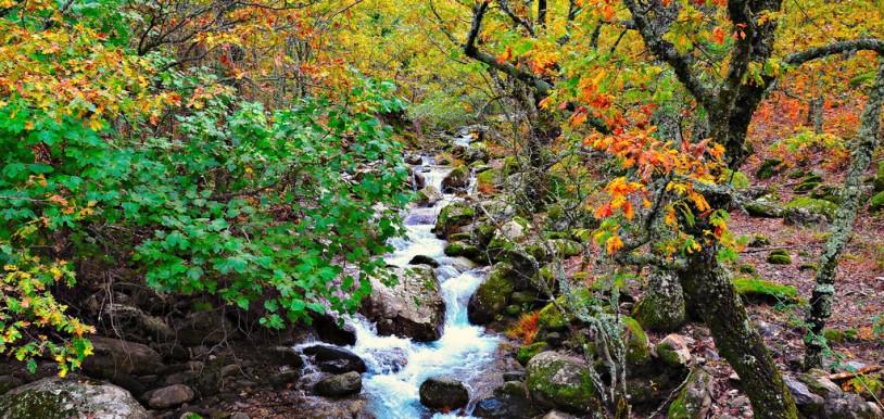 Descubre la belleza del otoño en el Valle del Jerte. Esta imagen tiene Licencia CC en el Flickr de Raúl A.-
