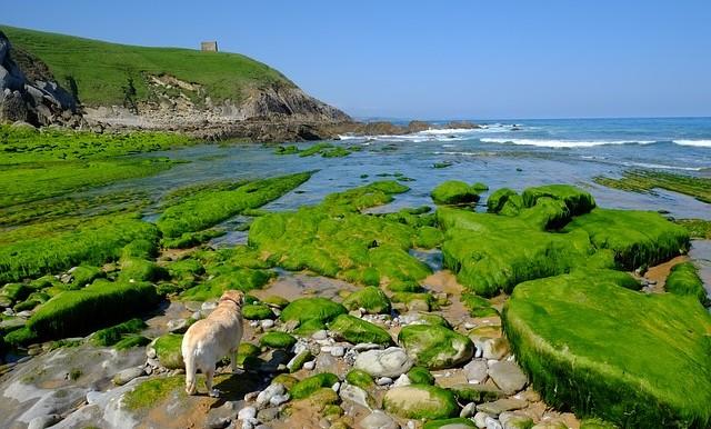 Unas vacaciones nicas en la costa de cantabria - Vacaciones en cantabria ...