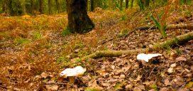 bosques setas cadiz